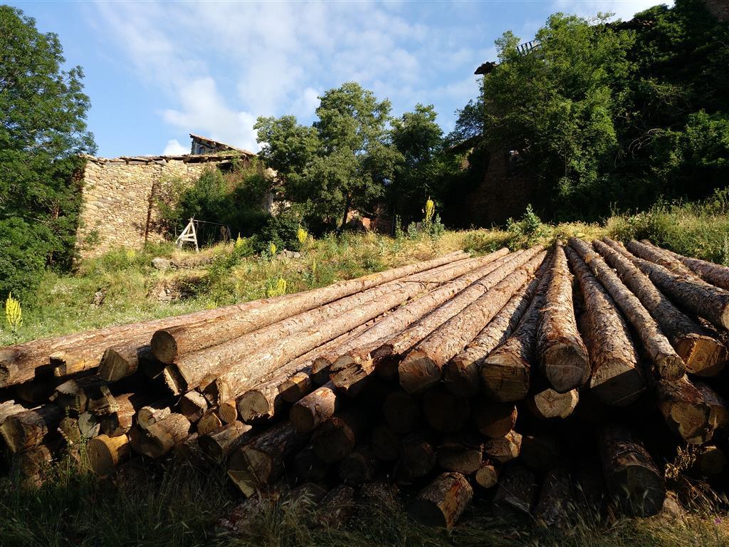 Taller pràctic de reconstrucció amb fusta